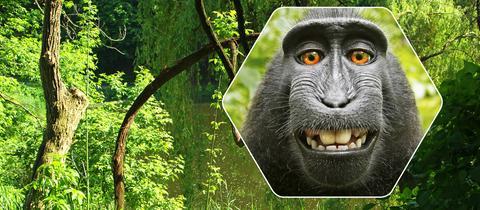 Affen-Selfie