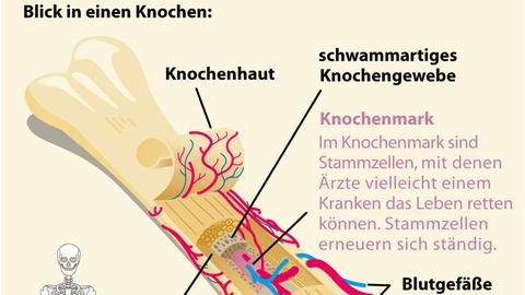 Knochenmarkspende
