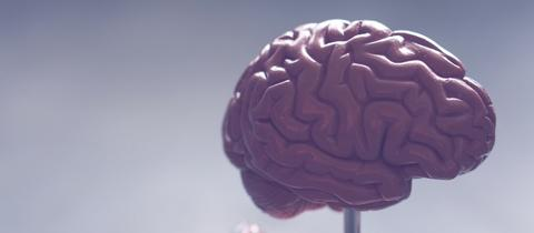 Neurodiversität
