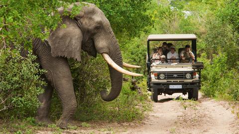 Elefant vor Safari-Jeep