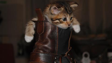 Katze im Stiefel